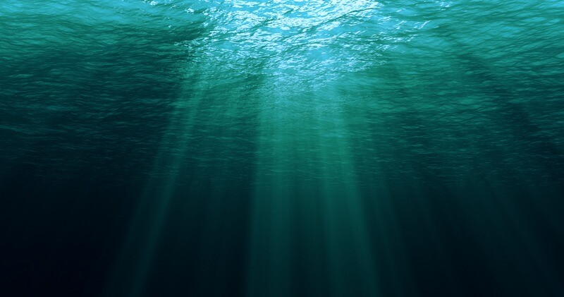 Wat is Marine Phytoplankton?